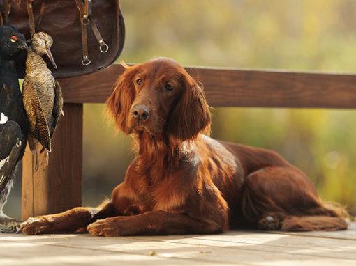 Hundeführerlehrgang