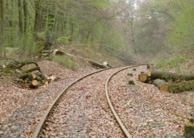 Der Wald im Wandel – gestern, heute und morgen