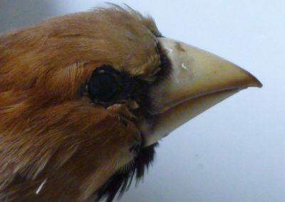 Jedem Vogel sein Futter – Vögel und Vogelfutter