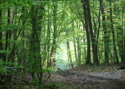 Der Wald als Seelentröster