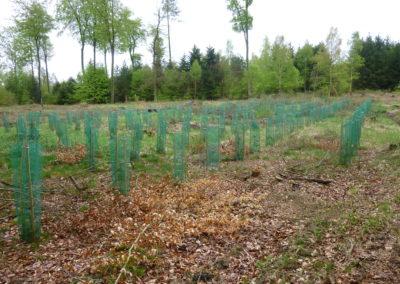 Land- und Forstwirtschaft – wie geht das eigentlich?