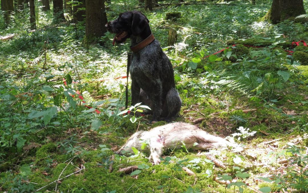 Jagd ohne Hund ist Schund !