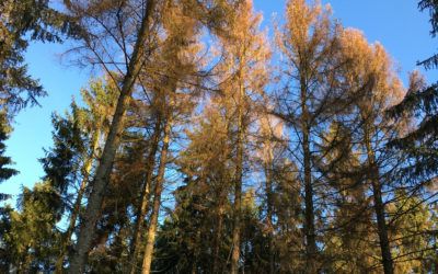 Klimawandel – Waldsterben